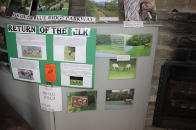 Elk exhibit at Waterrock Knob Visitor Center